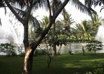 Palm Trees - Owns a resort in South India